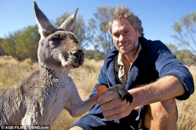 L Australien Chris Barnes Et Son Orphelinat De Kangourous